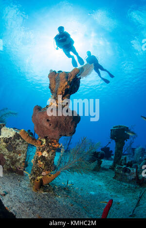 Los buceadores en los escombros del oro verde, gran caimán Imagen De Stock