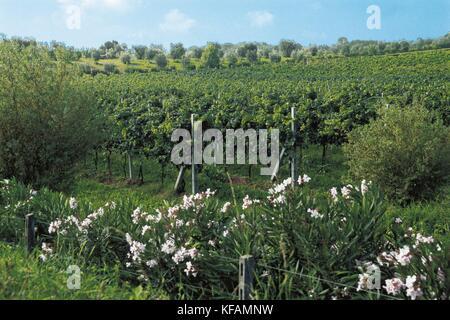 Trentino viñedos del valle dell'Adige Imagen De Stock