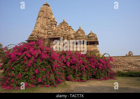 SSK - 288 un bellamente ordenados antiguo templo hindú dedicado al Señor Shiva y se denomina Kandariya Mahadev con un árbol de bougainvillea debajo Khajuraho, Madhya Pradesh, India Asia el 12 de diciembre de 2014 Imagen De Stock
