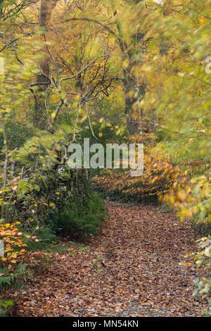 Colores de otoño en un carril en el valle de Conway, Snowdonia, Gales, Reino Unido Imagen De Stock