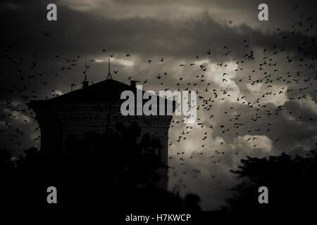 Bandada de aves volando pasado edificio de noche con nubes de tormenta en el fondo. Oscuro, Moody y espeluznante Imagen De Stock