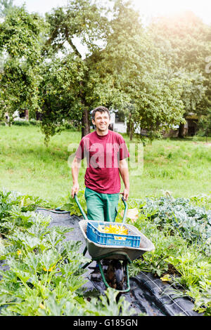 Agricultor empujando la carretilla de mano en la granja orgánica Imagen De Stock