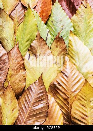 Disposición de las hojas en otoño Imagen De Stock