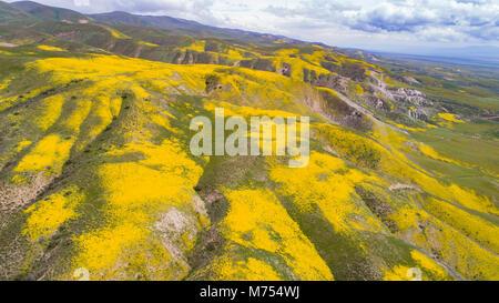 El Wildflower florece en el temblor de tierra, el Monumento Nacional Carrizo Plain, California, vista aérea Imagen De Stock