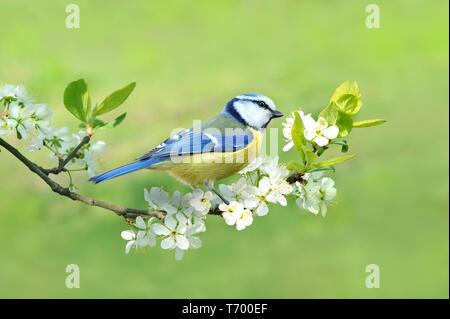 Primavera 331 Imagen De Stock