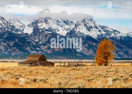 John Moulton granero histórico, mormona Fila, parque nacional Grand Teton, Wyoming, EE.UU. Imagen De Stock