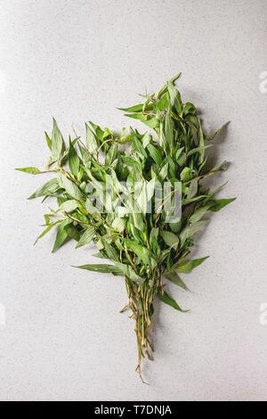 Montón de orégano vietnamita verdes sobre fondo gris moteado. Plana, espacio laical. Imagen De Stock