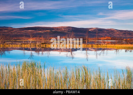 Hermosa tarde de otoño en la reserva natural Fokstumyra Dovre, Noruega. Imagen De Stock