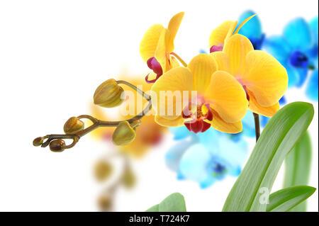 105 orquídeas Imagen De Stock