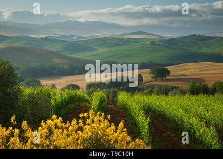 Mañana brumoso a través de la campiña toscana, cerca de San Quirico d'Orcia, Tusacny Italia Imagen De Stock