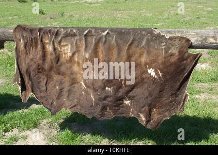 Cuero de vaca secado a la Purísima misión cerca de Lompoc CA. Fotografía Digital. Imagen De Stock