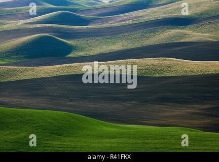 Ee.Uu., Estado de Washington, Palouse campos Imagen De Stock