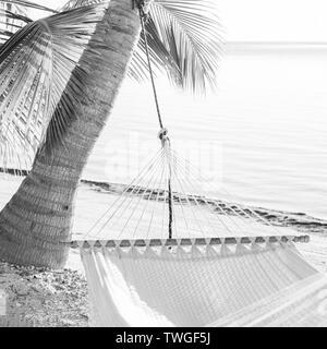 Vacaciones pacíficas hamaca en la playa de palmeras tropicales en impresionante blanco y negro Imagen De Stock