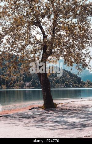 Árbol de otoño por lakeside, Francenigo, Veneto, Italia Imagen De Stock