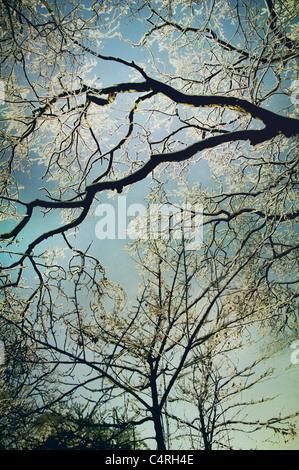 helada de invierno Imagen De Stock