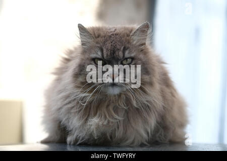 Retrato de un gato Imagen De Stock