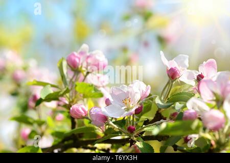 Primavera 438 Imagen De Stock