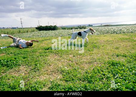 Perro en un plomo tirando un chico Imagen De Stock