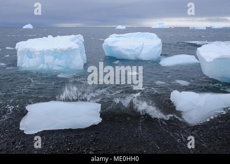 Los icebergs con grandes trozos de hielo arrastrados hasta una playa volcánica en Brown Bluff, en la Península Antártica, en la Antártida Imagen De Stock