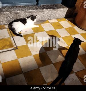Les chats dans la rue d'Essaouira, Maroc Photo Stock
