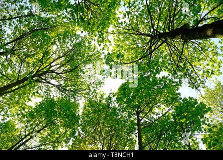 Jusqu'à la vue des arbres au décor boisé, Norfolk, Angleterre Photo Stock