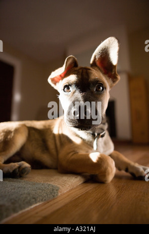 Chiot assis sur un tapis Photo Stock