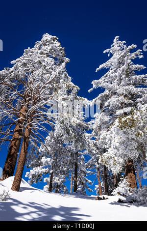 Saupoudré de neige dans les montagnes de San Bernardino, forêt nationale de San Bernardino, California USA Photo Stock