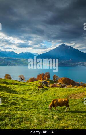 Niesen Mountain et le lac de Thoune, Berner Oberland, Suisse Photo Stock