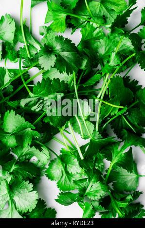 Macro de coriandre on White Photo Stock