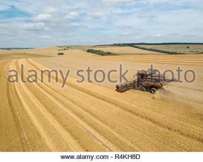 Antenne de la récolte de blé d'été de coupe de moissonneuse-batteuse avec de grandes cultures sur remorque tracteur farm Photo Stock