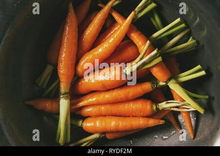 Les jeunes mini carottes à vintage bol en métal sur fond de marbre blanc. Mise à plat, de l'espace. Concept de cuisine, de l'alimentation arrière-plan. Photo Stock