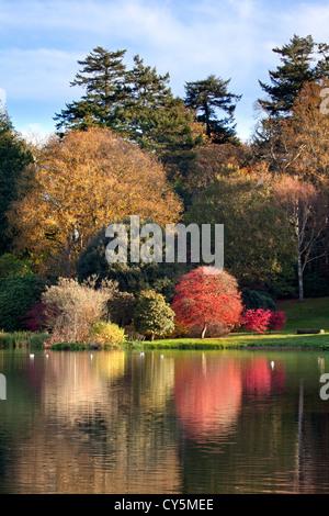 Couleurs d'automne dans le parc de Mount Stewart, l'Irlande du Nord. Photo Stock