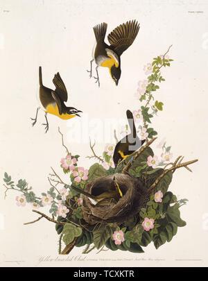 """La paruline polyglotte. À partir de """"Les Oiseaux d'Amérique"""", 1827-1838. Collection privée. Photo Stock"""