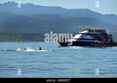 L'observation des baleines au large de la côte du Canada Photo Stock