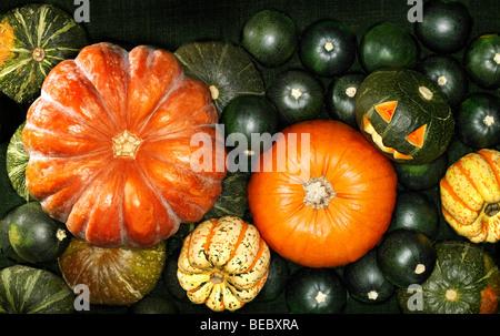 Pumpkins préparé pour l'Halloween. Photo Stock