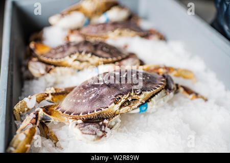 Groupe des mollusques crabe frais pris sur la glace à un marché aux poissons. Photo Stock