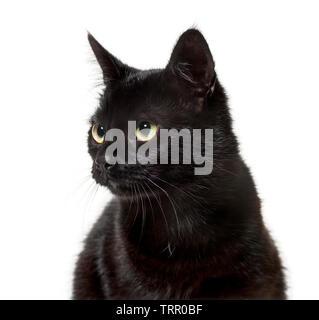Mixed-race de chat contre fond blanc Photo Stock