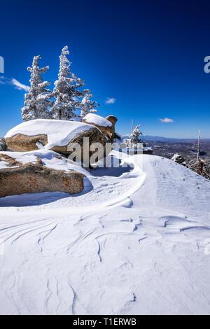La neige soufflée par le vent et le givre blanc sur les pins dans les montagnes de San Bernardino, forêt nationale de San Bernardino, California USA Photo Stock
