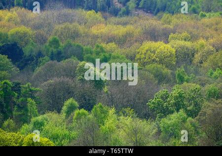 Les arbres feuillus mixtes au printemps, sheringham Park, North Norfolk, Angleterre Photo Stock