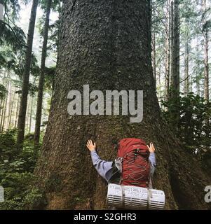 Arbre hugger Photo Stock