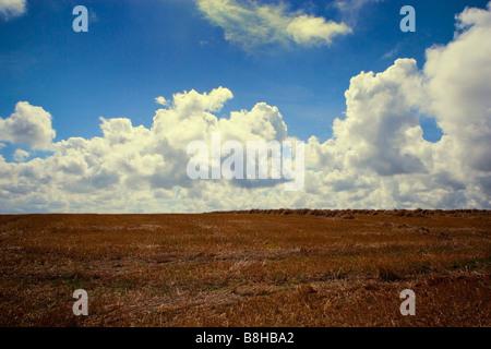 Paysage agricole français Photo Stock