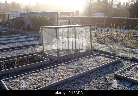 Tôt le matin, du givre sur les jardins d'attribution, melton constable, North Norfolk, Angleterre Photo Stock