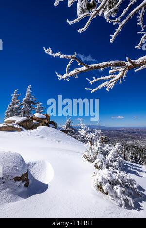 Averses de neige et de givre blanc sur les pins au-dessus de Lake Arrowhead dans les montagnes de San Bernardino, forêt nationale de San Bernardino, California USA Photo Stock