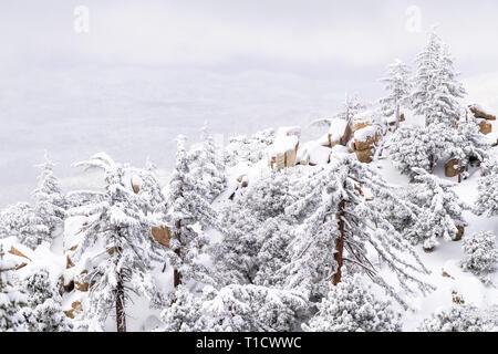 Saupoudré de neige pins et rochers dans les montagnes de San Bernardino, forêt nationale de San Bernardino, California USA Photo Stock