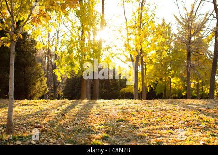 Autumn woods Photo Stock