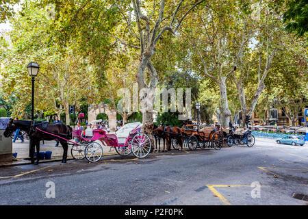 Voitures à cheval dans la vieille ville de Palma, centre historique de la ville, Ciutat Antiga, Palma de Mallorca, Majorque, Îles Baléares, Med Photo Stock
