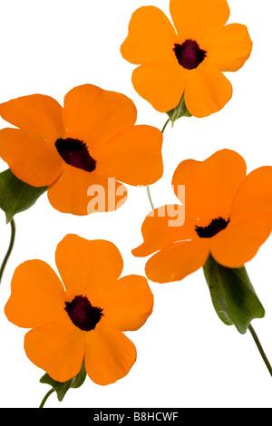 Photomontage de fleurs orange Photo Stock