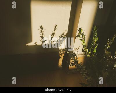 Les ombres de l'après-midi Photo Stock