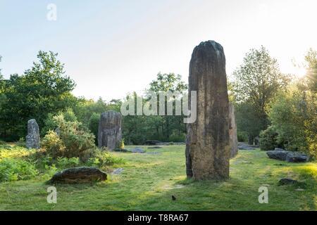 France, Morbihan, Monteneuf, le domaine mégalithique des pierres droites au lever du soleil Photo Stock