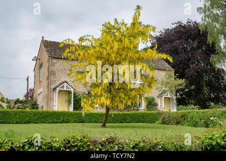 Laburnum anagyroides. Arbre Laburnum et cotswold cottages en Calmsden, Cotswolds, Gloucestershire, Angleterre Photo Stock